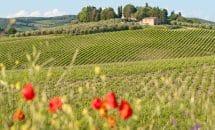 Ausflug Weingüter und Olivenhaine