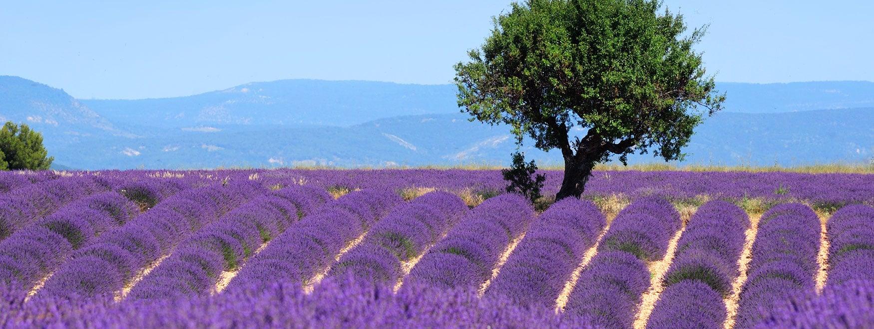 Ausflug in die Provence