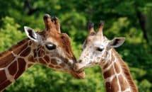 Ausflug in den Zoo von Montpellier
