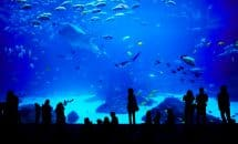 Besuch des Aquariums Mare Nostrum in Montpellier